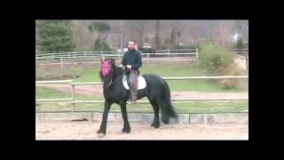 Horse Training Channel - The Beginning Of Piaffer ( Piaffe ) 1 Part - Ars Equitandi