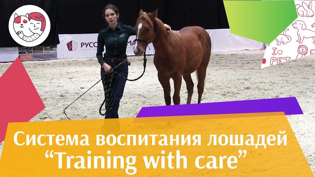 Шоу презентация системы воспитания Training with care Ч 3 Дарья Бойцова ЭКВИРОС 2016 iLikePet