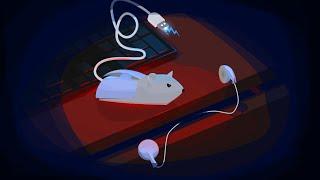 עכבר מחשמל  ספידארט בשילוב מדריך. כשתיכנסו תבינו ;)