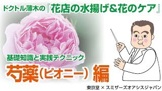 [花店の水揚げ&花のケア]芍薬ピオニー編