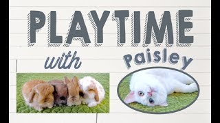Bunny Playtime with Paisley the Cat