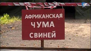 Работники ермолинского «НовСвина» боятся потерять работу