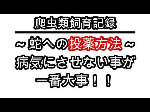 , title : '【爬虫類飼育記録】~蛇への投薬方法~病気にさせないことが一番大事!!