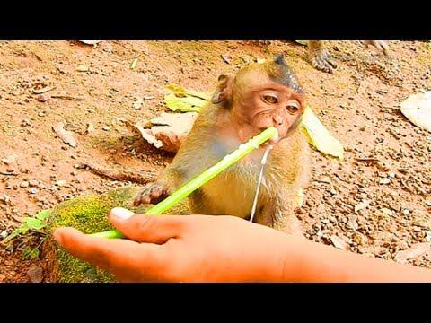 So Pity Jessie Baby Monkey, She Really Miss Her Mommy!