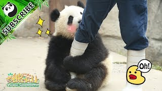 【Panda Countdown】Nanny's Legs, Nanny's Love, Nanny's Massage And More | iPanda