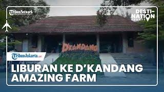DESTINATION UPDATE: Berlibur ke D'Kandang Amazing Farm, Wisata Edukasi Pertanian dan Peternakan
