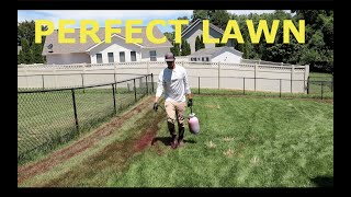 KILL Your Lawn And START OVER - Lawn Renovation Step 1