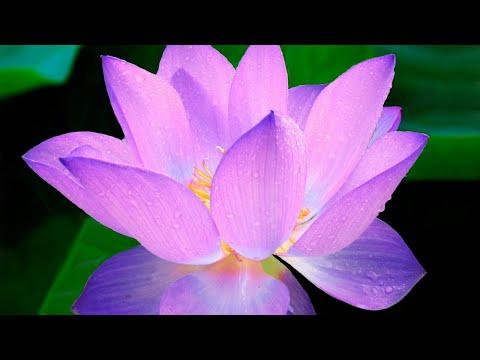 Online Ananda Meditation® Teacher Training Testimonials - YouTube