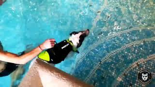 Dog Pool : Bichon, 19 ans, sacré nageur !