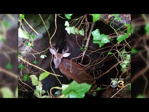 Deer Rescued From Well In Wilmington, Delaware
