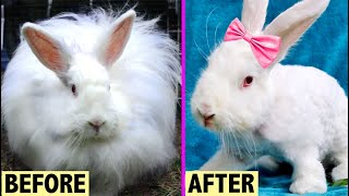 HOMELESS ANGORA BUNNY GETS A HAIRCUT! | AMAZING TRANSFORMATION 🌟💞