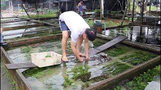 Farma roślin akwariowych Singapur