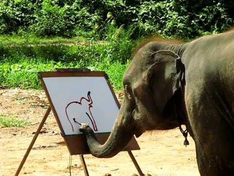 Απίστευτος ελέφαντας ζωγράφος
