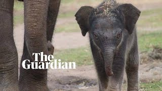 Elephant calf born at Western Plains zoo