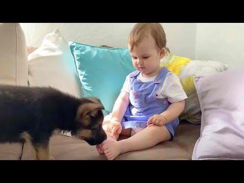 מפגש ראשון חמוד ומקסים בין גור וילדה קטנה