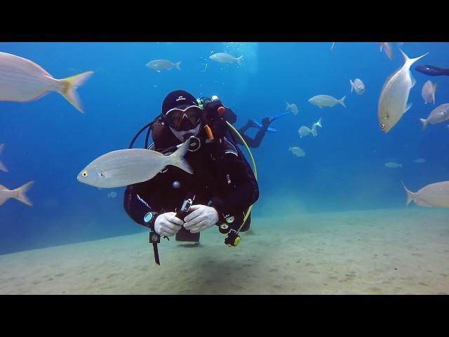 Safari Diving Lanzarote   Puerto del Carmen  Playa Chica Reef Dive