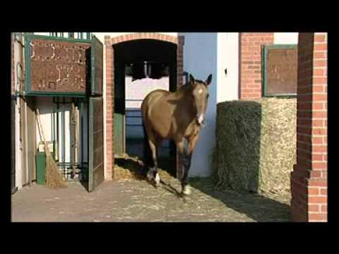 Veterinario ad apteki.kupit lattivatore di cavallo