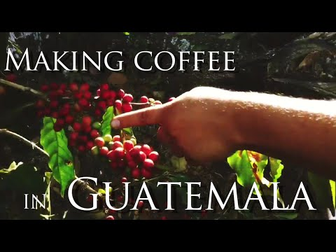 Making Coffee - Guatemalan style