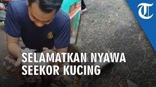 Video Aksi Heroik Penyelamatan Kucing oleh Petugas Pemadam Kebakaran
