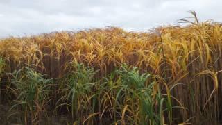 Biomass: an introduction