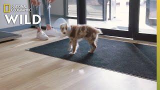 A Puppy Gets a Splint | Heartland Docs, DVM