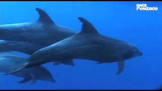 Nuestros Mares - Delfín