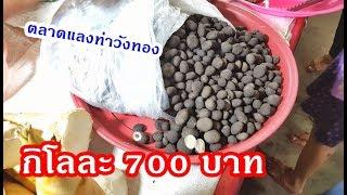 ตลาดแลงท่าวังทอง เห็ดเผาะกิโลละ 700 บาท ตัวแลน พืชผักนานาชนิด