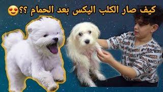 ردة فعل عزام ومحمد بعد حمام الكلب والحلاقة || كيف صار ؟؟