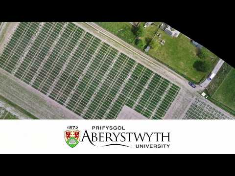 Oat Varieties from Aberystwyth University