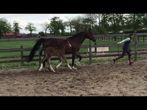 prestige foal 2019