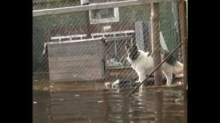 Наводнение в деревне Богородское
