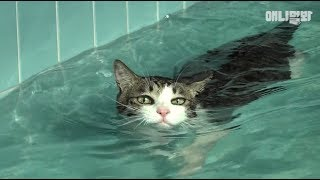 Swimming Phelps Cat *LIT*