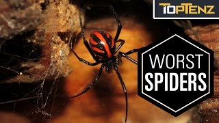 Top 10 Most VENOMOUS SPIDERS in the WORLD
