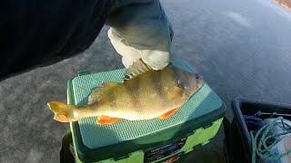 Рыбалка на тростенском озере форум