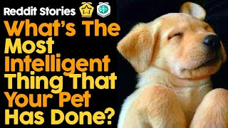 What's The Most Intelligent Thing That Your Pet Has Done? (Reddit Stories)