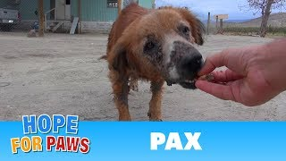 Rescue of a sick dog close to the U.S / Mexico border.