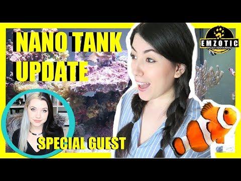Reef Tank Updates & Special Guest Solid Gold Aquatics!