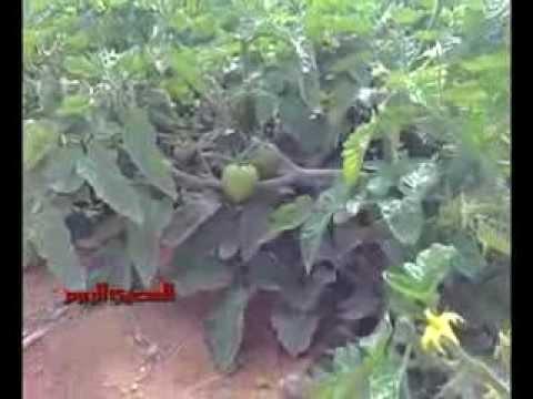 مبيدات إسرائيلية «مسرطنة» في مصر