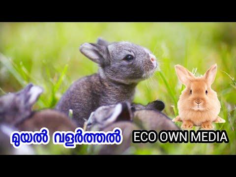 , title : 'മുയൽ വളർത്തൽ എങ്ങനെ ലാഭകരം ആക്കാം   Rabbit farming malayalam training