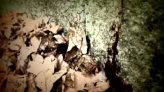 Video Old Man's Legend