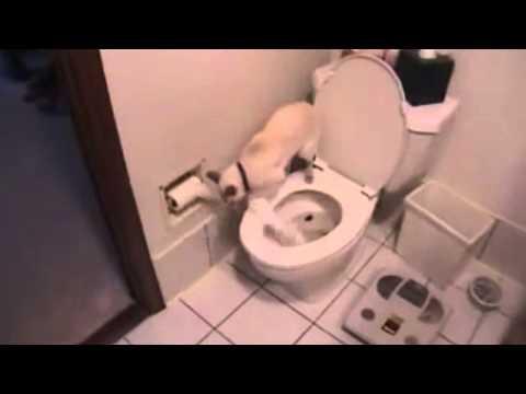 Katze geht auf´s Klo mit Toilettenpapier und spülen