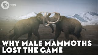 Why Male Mammoths Lost the Game (w/ TierZoo!)