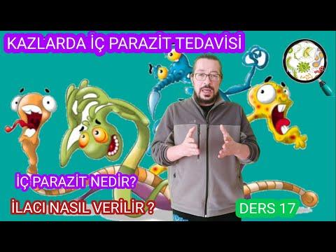, title : 'Kazlarda İç Parazit Tedavisi | iç parazit nedir? iç parazit ilacı nasıl verilir? Kazlar neden ölür?
