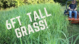MOWING 6 FT TALL GRASS - Mowing Tall, Thick Grass (Extremely Overgrown!) with Scag Zero Turn Mower