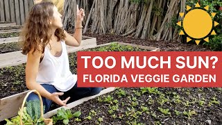 How Much Sun Do I Need to Grow Vegetables in Florida? | Organic Vegetable Gardening