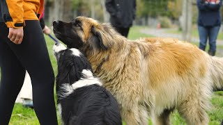 Newswise:Video Embedded dogs-act-jealously-even-when-they-don-t-see-their-rival