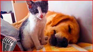 Приколы с котами #5 милые коты, lovely cats