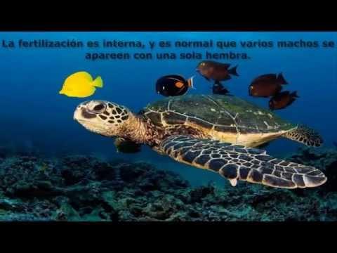 Animales de mar facebook gato mont s se mete al mar para atrapar a un tibur n - Videos animales salvajes apareandose ...