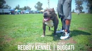 pure redboy dogs - मुफ्त ऑनलाइन वीडियो