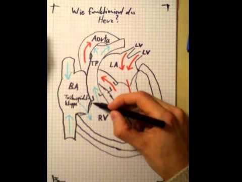 Behandlung von Hypertonie Wermuth